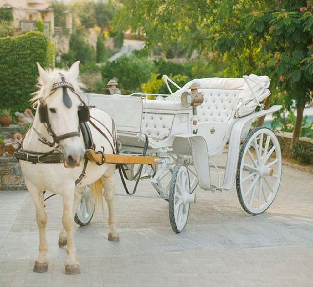 horse and carriage prom transport